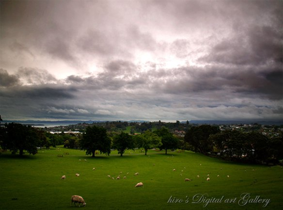 Cornwall Park_Auckland_New Zealand